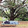 a rest in the park, auckland